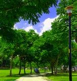 Bejaarde zorg onder de bomen in het park Stock Fotografie
