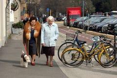 Bejaarden met hond Stock Foto's