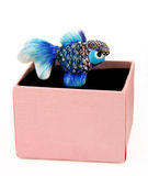Bejeweled Goldfish. Ceramic goldfish jewelry with rhinestones in a pink box Stock Photography