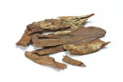 Bejolghota Cinnamomum (ветчина ) Сладостный Стоковое Изображение RF