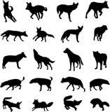 Bekend rond de wereld canids Stock Foto