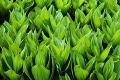 Bekervormige bladeren Royalty-vrije Stock Foto's