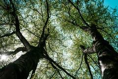 Bekijk de boom van onderaan royalty-vrije stock foto