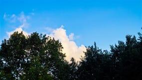 Bekijk de hemel en de bossen stock afbeeldingen