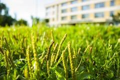 Bekijk de wereld van gras Stock Afbeeldingen