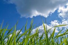 Bekijk de wolken Stock Foto's
