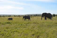 Bekijk deze Olifanten! royalty-vrije stock foto