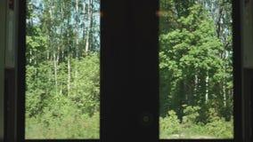 Bekijk het dikke bos van de schaduw van bewegende regen Langzame bewegingsweergave stock footage
