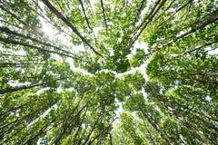 Bekijk omhoog mangrovebossen Stock Foto's