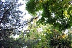 Bekijk omhoog treetops stock foto's