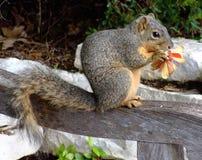 Bekijk wie de Bloemen eet! Stock Foto's