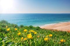 Bekijk zeegezicht met geel bloemen en gras. Royalty-vrije Stock Fotografie