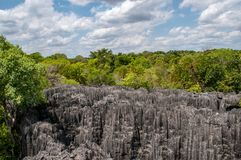 Forest and rocks in Tsingy de Bemaraha in Madagascar royalty free stock photography