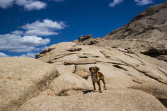 Bektau ata, extinct volcano in Kazakhstan. Hunting dog is walking in the mountains, Bektau ata royalty free stock photo