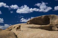 Bektau ata, wymarły wulkan w Kazachstan Zdjęcie Royalty Free