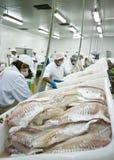 Bekwame vissensnijders stock afbeeldingen