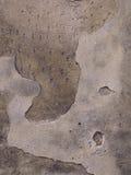 bekymrad stenvägg Royaltyfria Foton