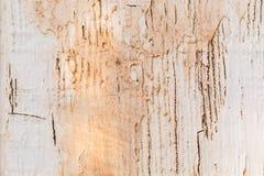 Bekymrat sprucket gammalt trä riden ut bakgrund arkivfoton