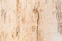 Bekymrat sprucket gammalt trä riden ut bakgrund royaltyfria foton