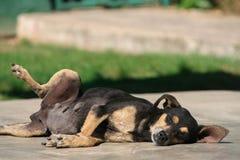 Bekymret är inte en hund Arkivfoton