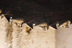 Belägga med metall cirkelsågbladet. Abctract foto. arbete bearbetar Arkivfoton