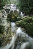 Bel écoulement waterfal tropical entouré par avant vert de nature Photos libres de droits