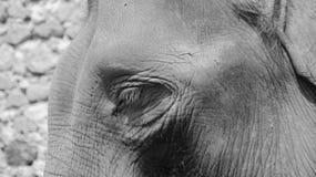 Bel éléphant dans le zoo de Gembiraloka photographie stock