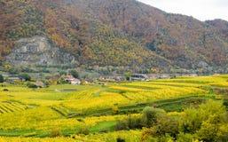 Bel élevage de vin en automne autour de ville de Durnstein, Autriche Image stock