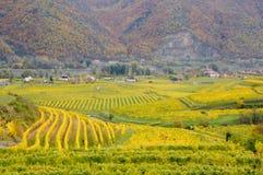 Bel élevage de vin en automne autour de ville de Durnstein, Autriche Photo libre de droits