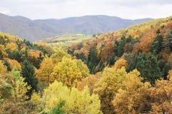 Bel élevage de vin en automne autour de ville de Durnstein, Autriche Image libre de droits