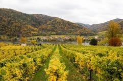 Bel élevage de vin sur la banque du Danube en automne autour de ville de Durnstein, Autriche Photos libres de droits