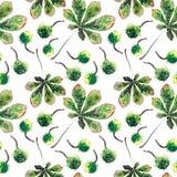 Bel érable de fines herbes floral lumineux graphique merveilleux de vert d'automne Photos stock