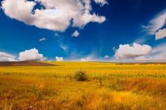 bel été d'horizontal Photo stock