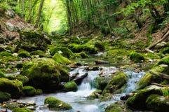 bel été de fleuve de nature d'image Photo stock