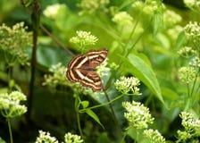 Bel été paisible de wildflowers de papillons de nature de couleurs Photos stock