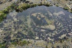 Bel étang à marée basse Photo stock