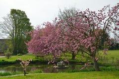 Bel étang de village entouré par des cerisiers photographie stock