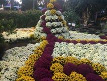 Bel affichage des fleurs faisant un modèle frais Photo libre de droits