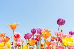 Bel aganst coloré de fleurs un ciel bleu Image stock