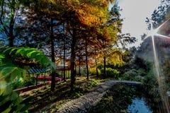 Bel après-midi d'automne avec des arbres avec les feuilles jaunes et vertes avec un lac avec la réflexion du soleil images stock