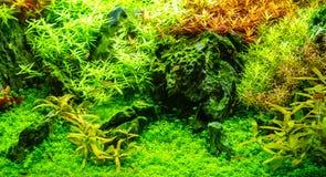 poissons au n on dans l 39 aquarium d 39 eau douce photo stock image 49662575. Black Bedroom Furniture Sets. Home Design Ideas
