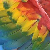 Bel ara d'écarlate d'oiseau Image libre de droits