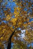 Bel arbre image stock