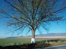 Bel arbre Images libres de droits