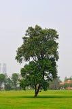 Bel arbre Image libre de droits