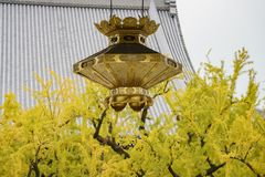 Bel arbre antique de lampe et de ginkgo se transformant en jaune photographie stock