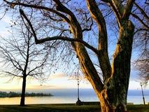 Bel arbre au coucher du soleil près du lac images libres de droits