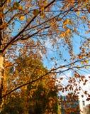 Bel arbre automnal vibrant image libre de droits