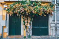 Bel arbre avec des fleurs au milieu de deux entrées de porte au vieux bâtiment traditionnel photos stock