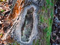 Bel arbre avec deux collors Photo libre de droits